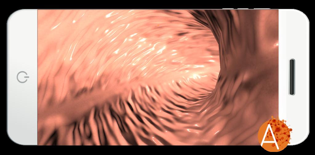 Anatomyou VR - Biliar Tract