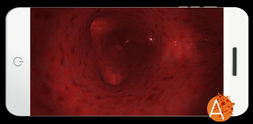 Anatomyou VR - Circulatory System - Arteries